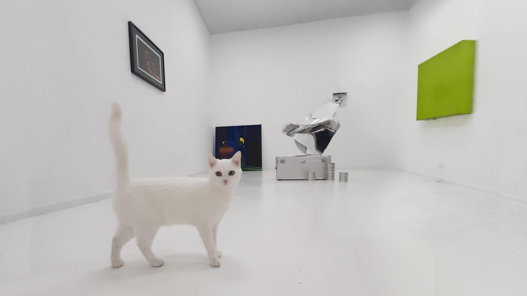 biały kot na wystawie Pustostan w Kąt Kultury